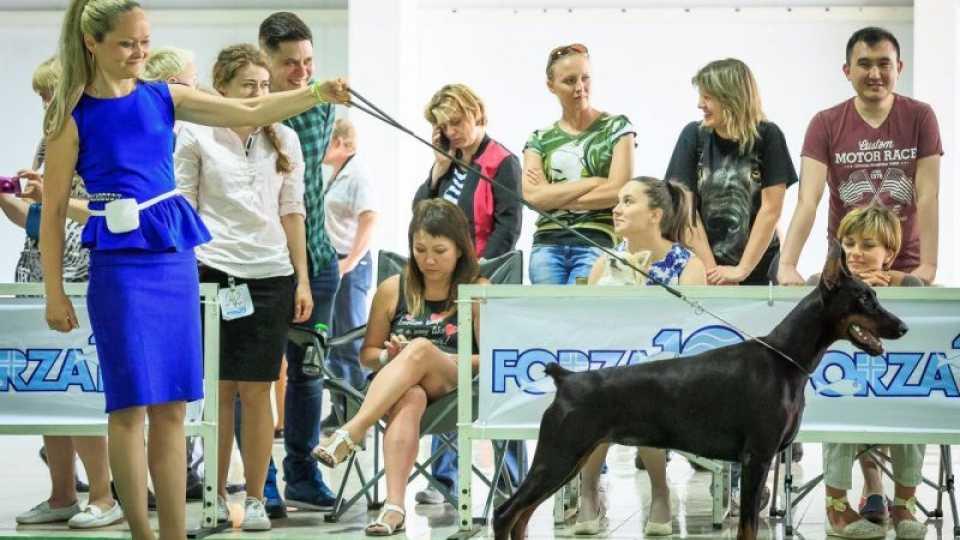 """Национальная выставка собак """"В кругу друзей"""" ,13-14 мая 2017г"""