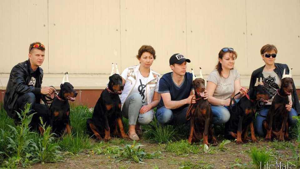"""Выставка собак, 3 мая, г.Алматы, КЦ """"Фиеста"""""""